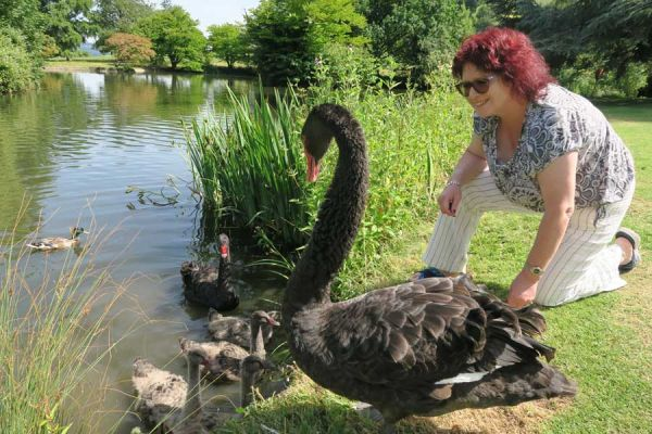 Karen feeding the swans